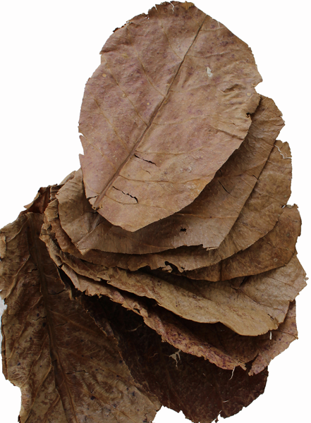 Picture for category Grade C Catappa Leaves
